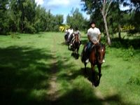 Ausritt in Mauritius - Mont Choisy Horse Riding Delights