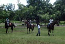 Reiten in Mauritius - Mont Choisy Horse Riding Delights
